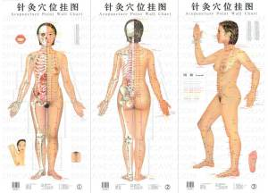 Akupuntur, http://griyahusadautama.wordpress.com/, 081 233 50545